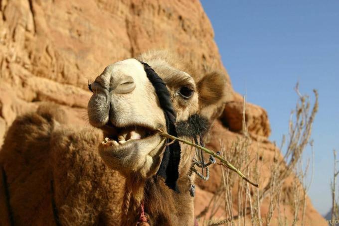 Wadi Rum 695